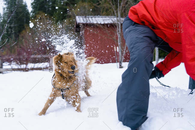 Dog being hit with snow