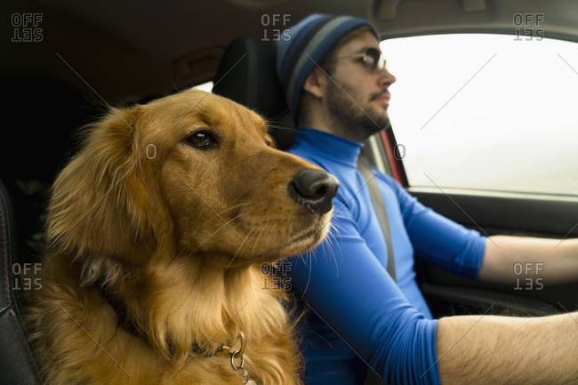 Dog riding in car with man