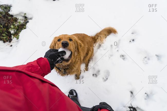 Man feeding dog snowball