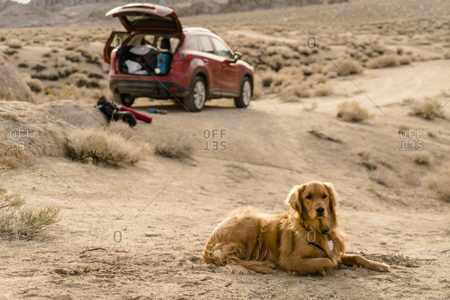 Dog lying in rocky wilderness