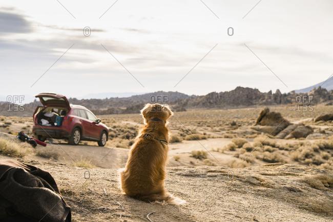 Dog sitting in rocky wilderness