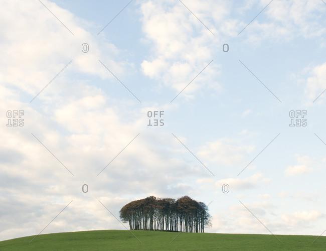 Copse of trees near Okehampton Devon