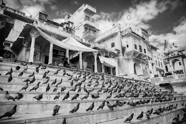 Pushkar, India - March 3, 2015: Pigeons on city steps in front of Pushkar Lake, India