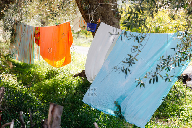 Clotheslines around an olive tree, Noto, Syracuse, Sicily, Italy