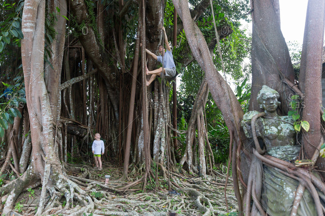 Father and son climbing in Banyan tree, boy 3 years