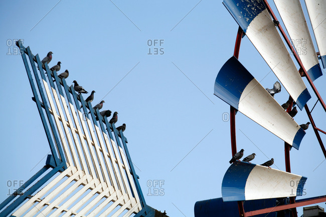 Wind wheel with blue and white rotor blades and pigeons sitting on top,