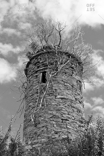 Old tower planted with trees, County Leitrim, Ireland, Europe