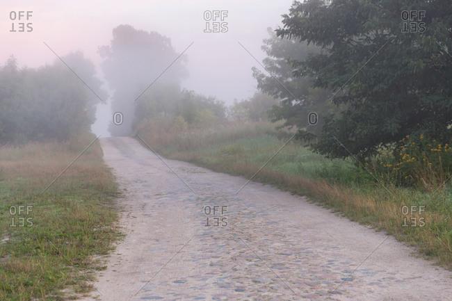 Path in morning fog on the Schorfheide-Chorin Biosphere Reserve