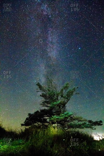 Tree and starry sky at night, Rendsburg-Eckernfoerde, Schleswig-Holstein, Germany