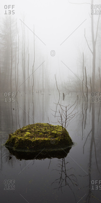 Katenhofer moor, Daenischer Wohld, Rendsburg-Eckernfoerde, Schleswig-Holstein, Germany