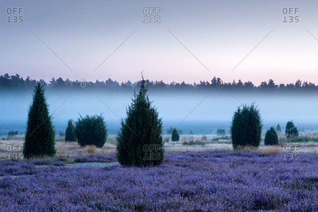 Early morning fog, Lueneburger Heide, Lower Saxony, Germany