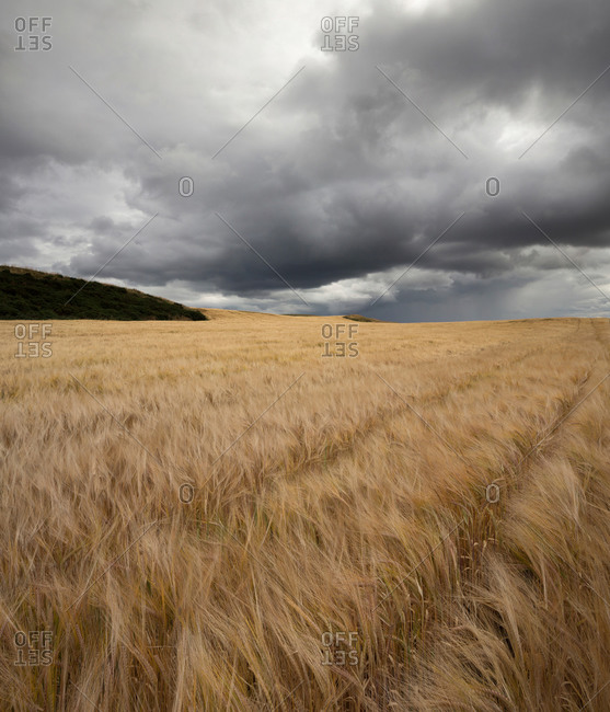 Meadow near St Abb's Head, Northfield, Scotland, United Kingdom