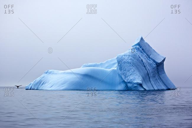 Iceberg with whale fluke, East Greenland, Greenland
