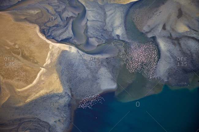 Aerial shot, flying flamingos over the lagoon of Sandwich Harbor, Namibia