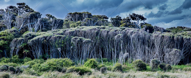 Forest, nature reserve at Curio Bay, Catlins, South Island, New Zealand