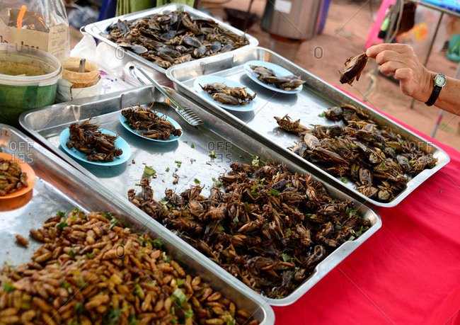 Snacks of insects in Bangkok, Thailand, Asia