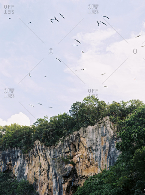 Birds flying over jungle cliff in Dominican Republic