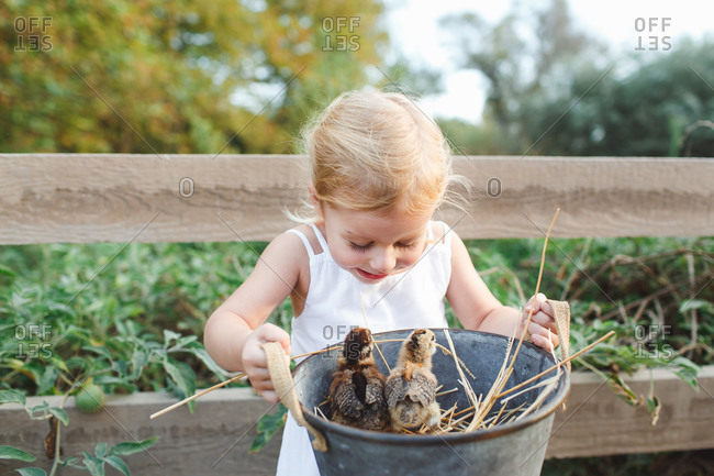 Little girl carrying a pot with baby chickens