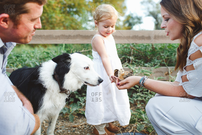 Woman holding baby chickens for little girl and dog to see