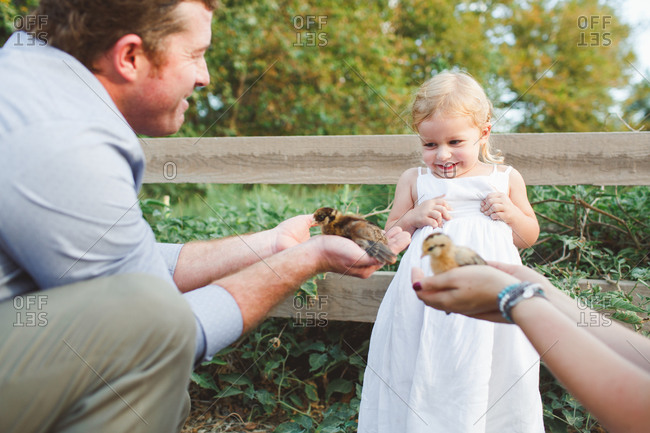 Parents holding baby chickens for little girl to see
