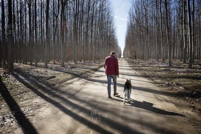 Rear view of man walking with Siberian Husky on dirt road amidst bare trees during winter