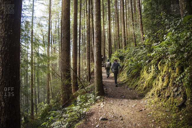 Rear view of hikers walking on dirt footpath in forest
