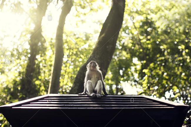 Indonesia, Bali, Ubud, Monkey forest temple, monkey sit in forest, Ubud Bali Indonesia