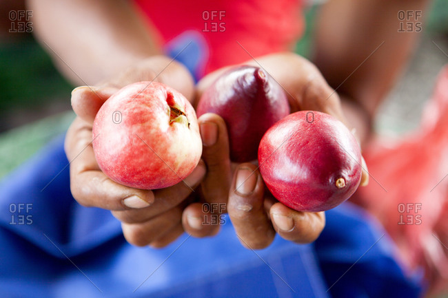 Hands holding three red fruits