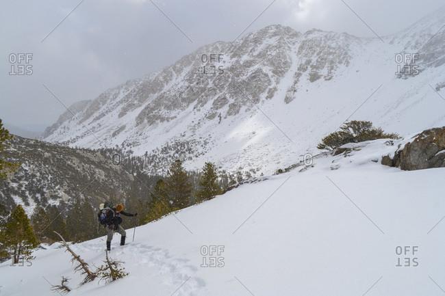 Snowshoeing with man's best friend in John Muir Wilderness