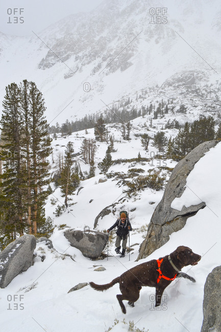 Snowshoeing with man's best friend in John Muir Wilderness