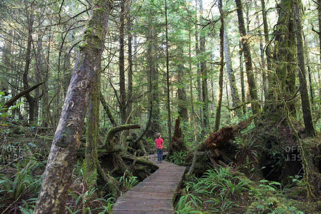 A young boy walks through the trees in an old growth forest in Pacific Rim National Park