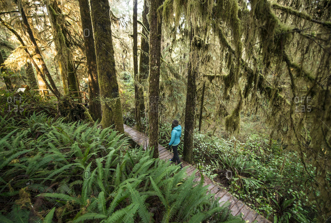 A woman walks through the trees in an old growth forest in Pacific Rim National Park
