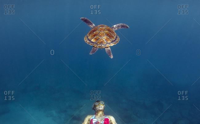 Pro windsurfer Iballa Ruano swims with a turtle