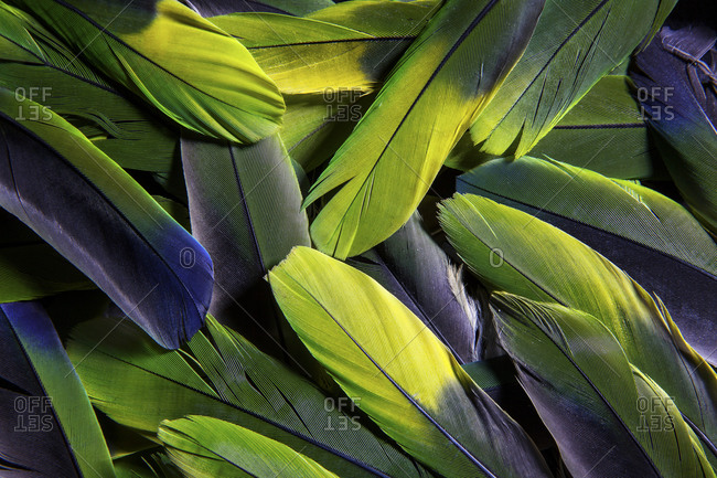 Close-up of bright green and yellow feathers