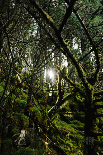 A mossy forest in sunlight