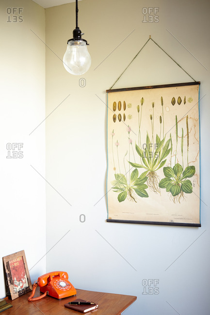 A poster of a vintage plant print in a home office