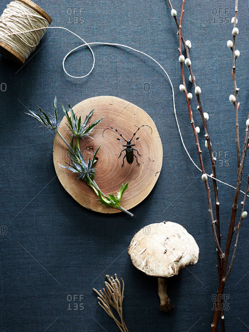 Still life with mushroom and bug