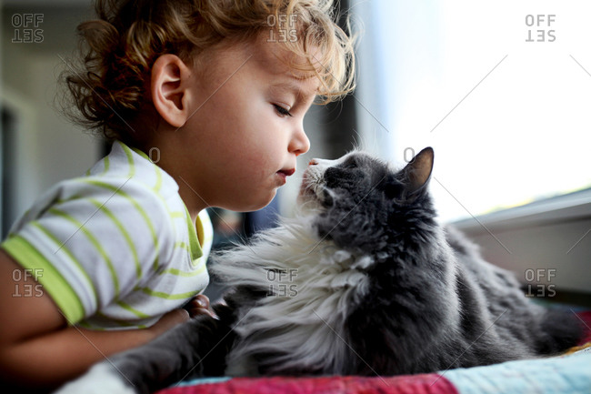 Boy leaning towards a cat