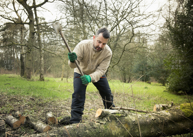 A forester at work in the woods wielding an axe and chopping up logs