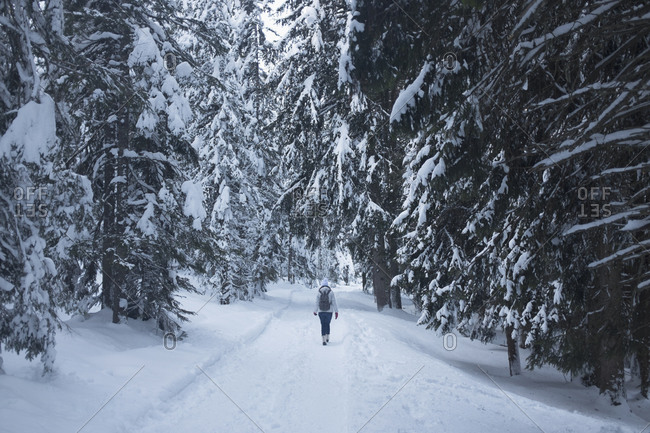 Rear view of woman walking on snow covered field amidst trees, Val di Fiemme