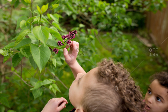 Children touching lilacs