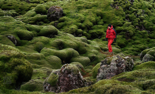 Man exploring landscape of moss covered lava fields in south Iceland