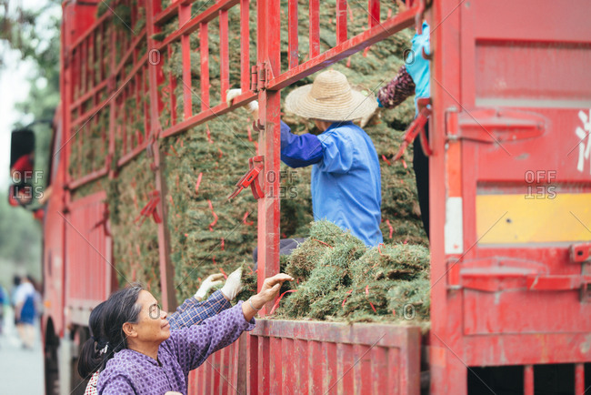 April 3, 2016: Workers unloading turfing grass from truck, Guangzhou, China