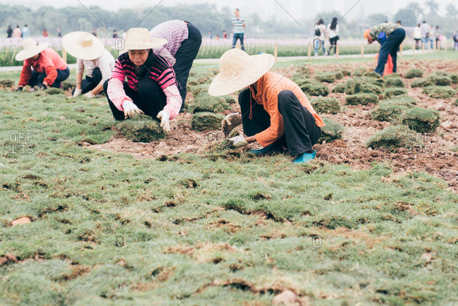 April 3, 2016: Workers turfing grass in a garden in Guangzhou, China