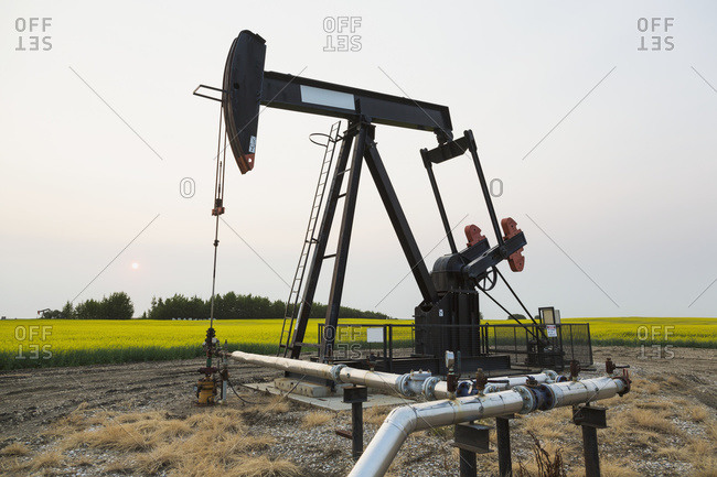 Pumpjack at work on oilfield lease in a canola field in rural Alberta; St. Albert, Alberta, Canada
