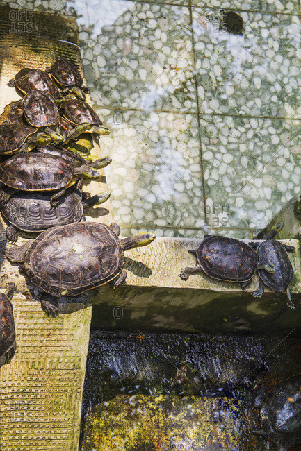 Turtles at the Official God of War Temple; Tainan, Taiwan