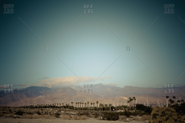 Palm trees against a turquoise sky and arid mountains in the background with wind turbines; Palm Springs, California, United States of America