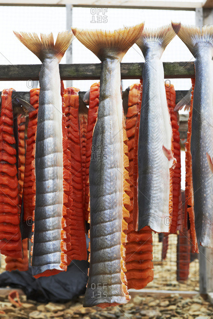 Arctic Char filets on drying racks, Arctic Ocean, near Cambridge Bay; Nunavut, Canada