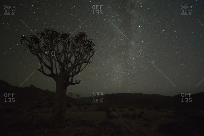 Kookerboom tree with Milky Way, Richtersveld National Park; South Africa