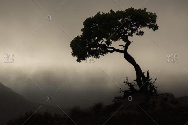 Silhouette of a tree against a stormy sky in Richtersveld National Park; South Africa